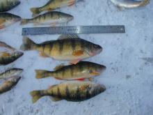 Ice fishing cascade perch