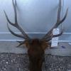 Case evidence elk