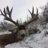 Trophy atypical buck