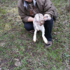 Hubijar case evidence - Snowshoe hare