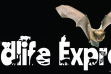 Wildlife Express: Bats