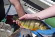 Idaho fish and game idaho fish and game for Big bear lake fish stocking schedule