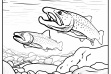bull_trout_coloring_page