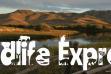 wildlife-express-seasonal-banner