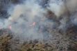 wildfire, McCall Subregion,