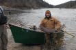 Steelhead fishing succes near Orofino, Idaho in January 2015