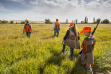 Young hunters and mentor hunt for pheasants during youth pheasant hunt at C.J. Strike WMA