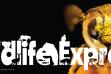 Wildlife Express Banner: Bees