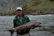 Harvested Chinook on the Lower Salmon River