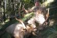 Nice Panhandle bull taken during archery seson