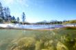 Chinook Salmon spawning Salmon River