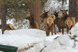 Feeding Elk in Garden Valley in January 2017