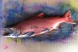Gyotaku fish print kokanee