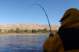 Steelhead Angler on the Clearwater River