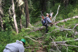 Wildlife technicians use chainsaws to clear logs off trail / Photo by Kara Campbell