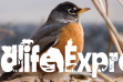 Wildlife Express Banner: Songbirds