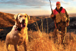 oakley-dog-landscape-bird-hunting