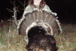 youth turkey hunter.jpg