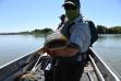 Snake River Catfish.jpg