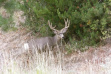 four_point_buck