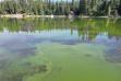 Algae in north Hayden Lake