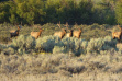 Elk bull group in Idaho photographed by Bryan Huskey