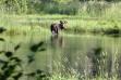 moose1030024.jpg