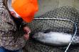salmon_angler_net_clearwater_river.jpg