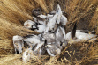 snow_geese_left_to_rot