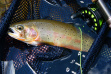flyfish troute22.jpeg