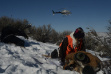 mule deer, helicopter, trapping, radio collar, southwest region