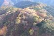 forest_wide_aspen_restoration