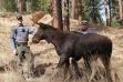 moose_asa_4_cropped