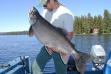 payette_lake_trout