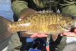 payette_smallmouth_lr