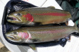 Steelhead pair