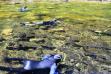 snorkel survey, Moose creek on Selway, photo by Mike Demick