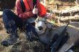 boy with is mule deer buck and rifle in hunter orange vertical shot