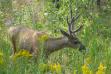 Mule deer, McCall subregion, deer hunting