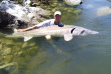 Koenig-idaho-record-fish-image-sturgeon
