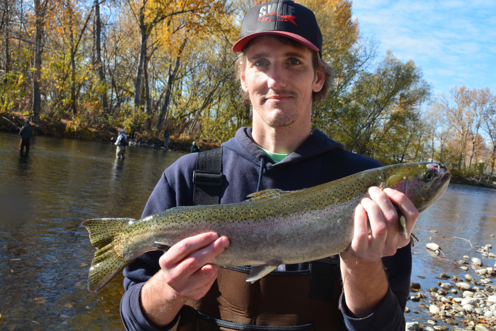 They 39 re back steelhead return to the boise river idaho for Idaho fish and game hunter report