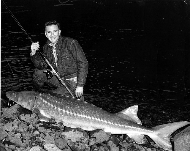 Conserving snake river sturgeon introduction part 1 of 7 for Idaho fish and game regulations