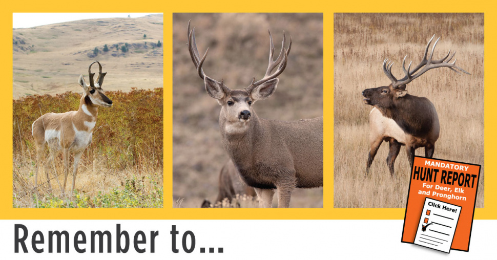 Hunters reminded to report on deer elk pronghorn tags for Fish and game stocking report