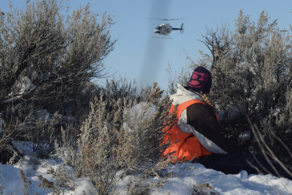 Fish and game begins winter trapping and animal counts for Idaho fish and game regulations