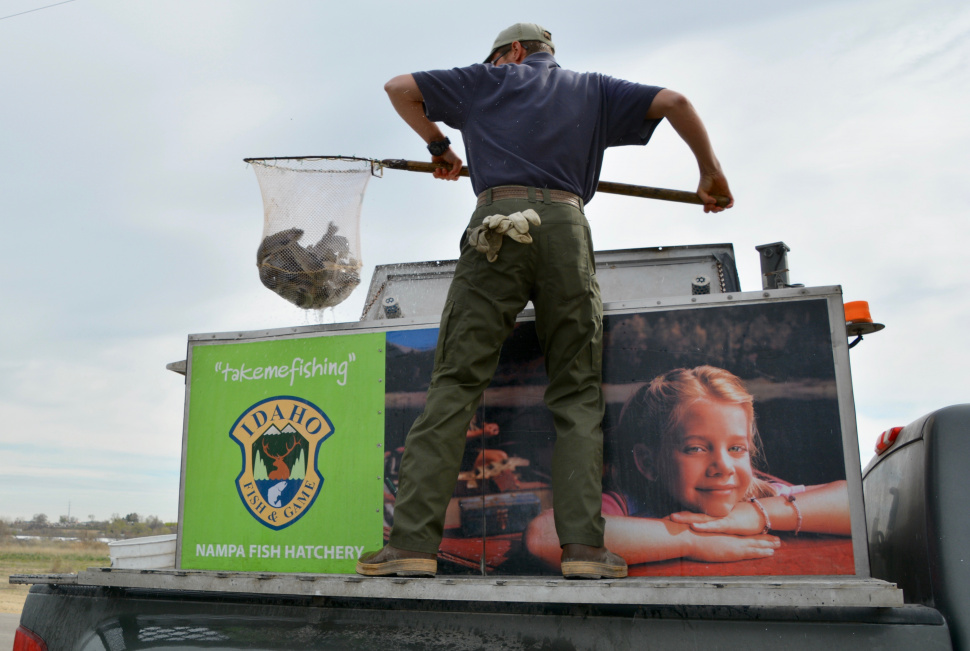 Nampa fish hatchery is bringing anglers hundreds of for Idaho dept of fish and game