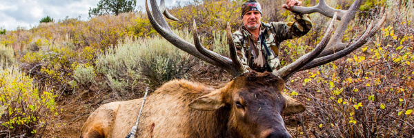 Greg Puffe with his bull elk from the super hunt February 2016