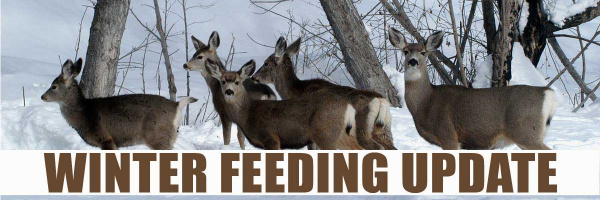 Winter Feeding Update