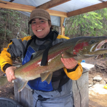 Adult steelhead