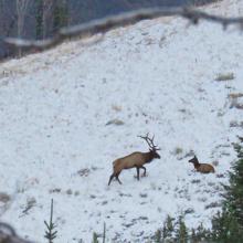 banner-elk-in-snow