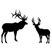 elk_deer_combo